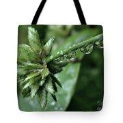 Rain On The Umbrella Plant 2 Tote Bag