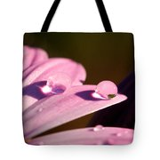 Rain Water On Daisy One Tote Bag