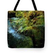 Rainbow Autumn Ferns At Pickle Creek 6303 H_3 Tote Bag