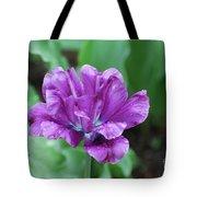 Raindrops Clinging To The Purple Petals Of A Tulip Tote Bag