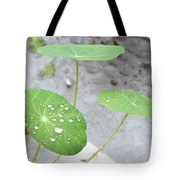 Raindrops On A Nasturtium Leaf Tote Bag