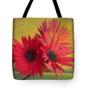 Raindrops On Gerbera Tote Bag