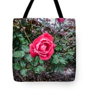 Raindrops On The Leaves Tote Bag