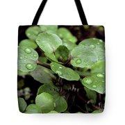 Rainy Day 11 Tote Bag