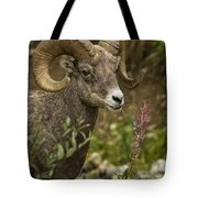 Ram Eating Fireweed Cropped Tote Bag