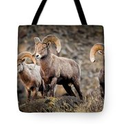 Ram Rock Mountain At Dawn Tote Bag