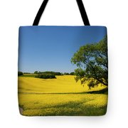 Rapeseed Field,west Sussex, England  Tote Bag