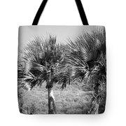 Rare Palm Trees Curacao Tote Bag