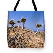 Rare Palm Tress Curacao Tote Bag