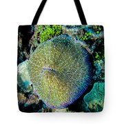 Razor Coral At Pakin Atoll Tote Bag
