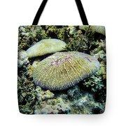 Razor Coral In Kwajalein Tote Bag