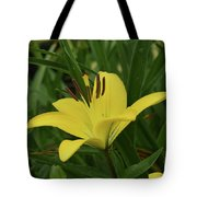Really Beautiful Yellow Lily Growing In Nature Tote Bag