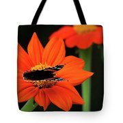 Red Admiral Nectaring On Tithonia Tote Bag