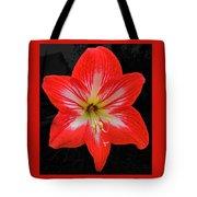 Red Amaryllis Tote Bag