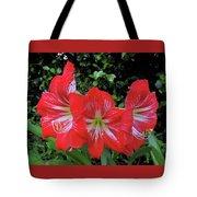 Red Amaryllis Trio Tote Bag