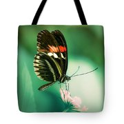 Red And Black Butterfly On White Flower Tote Bag