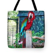 Red  And  Green Macaw         Zoo      Indiana Tote Bag