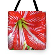 Red And White Beauty Tote Bag