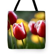 Red And White Tulips Large Canvas Art, Canvas Print, Large Art, Large Wall Decor, Home Decor Tote Bag