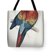 Red And Yellow Macaw  Tote Bag
