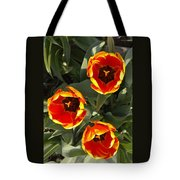 Red And Yellow Tulip Trio    Spring  Indiana Tote Bag
