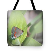 Red-banded Hairstreak Butterfly Tote Bag