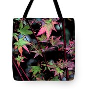 Red Bark Maple  Tote Bag