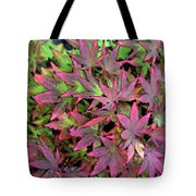 Red Bark Maple Leaves  Tote Bag