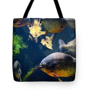 Red Bellied Piranha Fishes Tote Bag