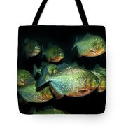 Red-bellied Piranha Tote Bag