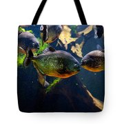 Red Bellied Piranha Or Red Piranha Tote Bag