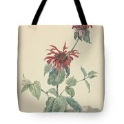 Red Bergamot In A Landscape, Aert Schouman Surroundings Of, C. 1750 - C. 1775 Tote Bag