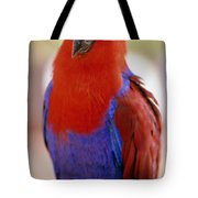 Red Blue Macaw Tote Bag