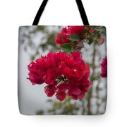red bougainvillea in Laguna Guerrero Tote Bag