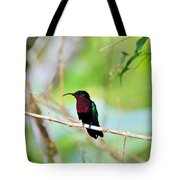 Red Breasted Humming Bird  Tote Bag