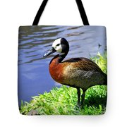 Red Breasted Wood Duck Tote Bag