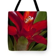 Red Bromiliad Tote Bag
