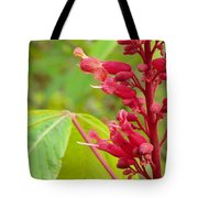 Red Buckeye Tote Bag