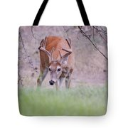 Red Bucks 6 Tote Bag by Antonio Romero