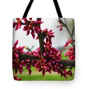 Red Buds  Tote Bag