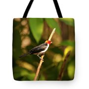 Red Capped Cardinal Tote Bag
