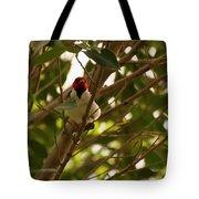 Red-capped Cardinal Digital Oil Tote Bag