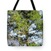 Red Cardinal In Tree Tote Bag