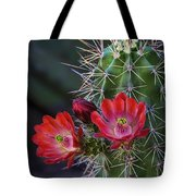 Red Claret Cup Cactus  Tote Bag