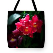 Red Cluster Tote Bag