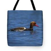 Red-crested Male Pochard Duck, Netta Rufina Tote Bag