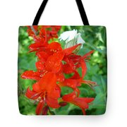Red Crocosmia Lucifer Tote Bag