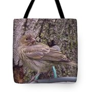Red Crossbill Female  Indiana  Summer Tote Bag