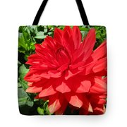 Red Dahlia In The Green Tote Bag