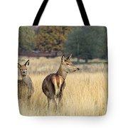Red Deer 7 Tote Bag